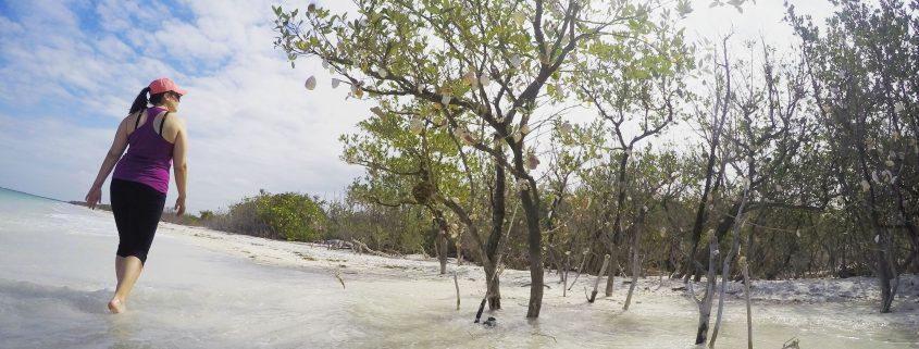 Walk to Caladesi Island State Park