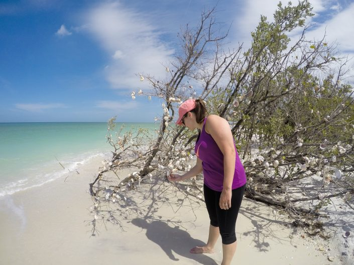Clearwater Beach Shells