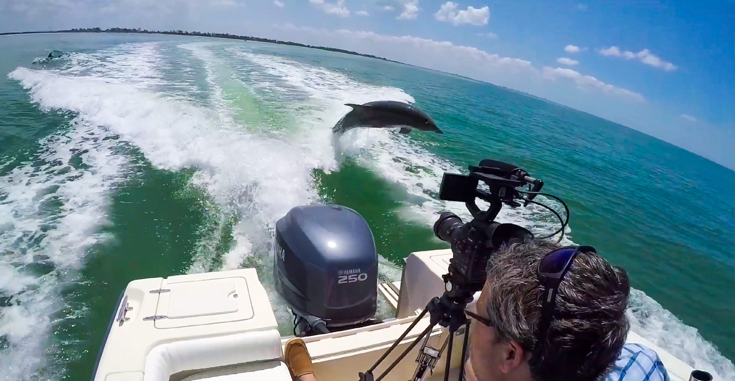 Clearwater Beach Dolphin Tours